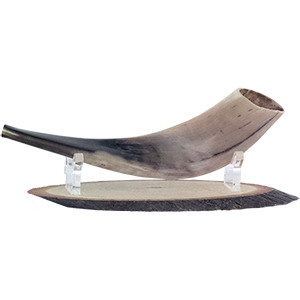 Wooden Shofar Stand with Lucite Stand.