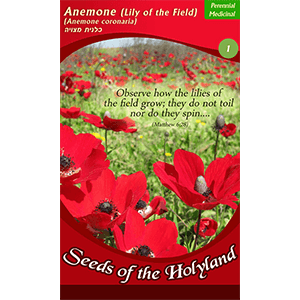 Anemone (Lily of the Fields) Seeds of the Holy Land