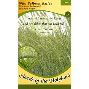 Wild Bulbous Barley Seeds of the Holy Land