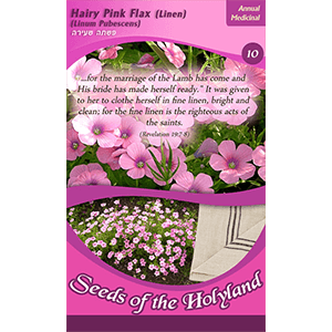 Hairy Pink Flax Seeds of the Holy Land