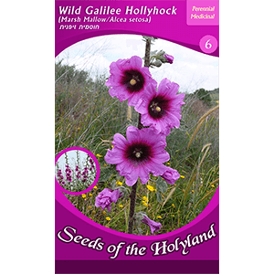 Wild Galilee Hollyhock Seeds of the Holy Land