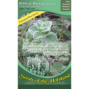 Biblical Hyssop Seeds of the Holy Land