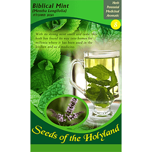 Biblical Mint Seeds of the Holy Land
