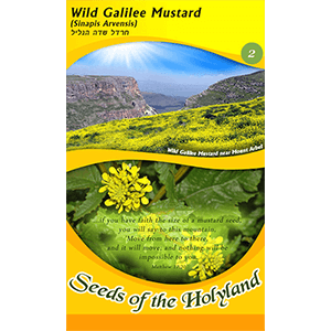 Wild Galilee Mustard Seeds of the Holy Land