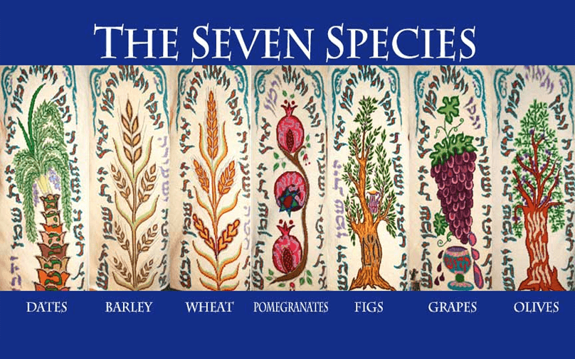 The Symbolism Of The Seven Species Of Israel